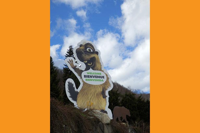 Enseigne marmotte